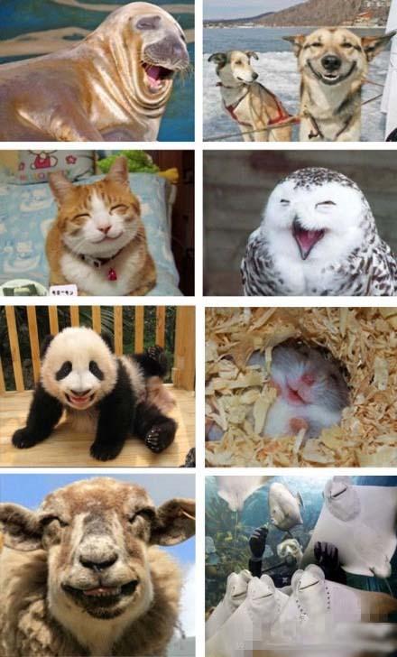 开心,搞笑,笑一笑,图片
